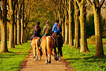 Jinetes paseando a caballo por la naturaleza